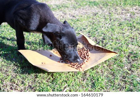 Dog eating food - stock photo