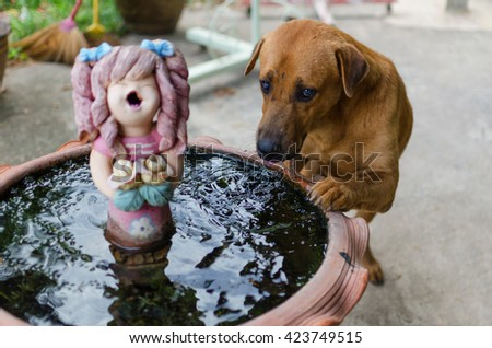 dog eating water
