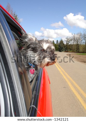 Dog enjoying a car ride