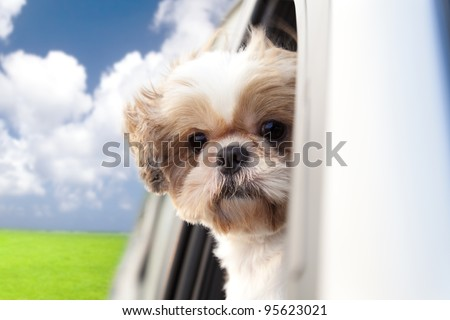 dog enjoying a ride in the car - stock photo
