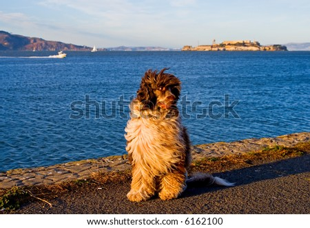Dog enjoying sunset by the ocean - stock photo