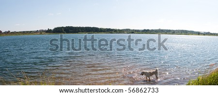 dog enjoys the cool water of a  lake. panorama - stock photo