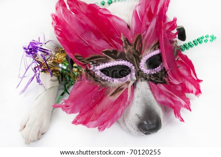dog exhausted after big party - stock photo