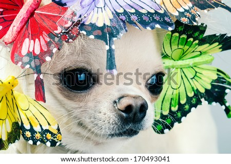 dog face close up picture . - stock photo