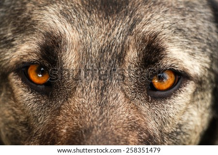 Dog face. Dog view. Close up on eyes of a dog. - stock photo