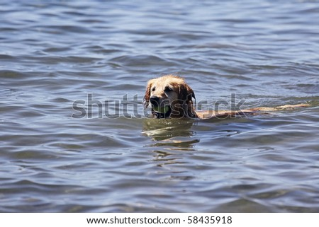 Dog Fetch - stock photo