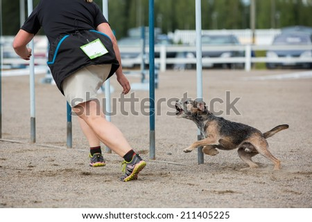 Dog follows the handler in agility competition - stock photo