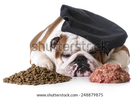 dog food debate - bulldog chef laying between pile of kibble and raw dog food - stock photo