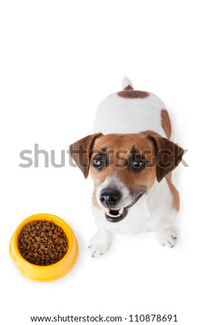 Dog food. Jack Russel terrier with dog bowl on white background - stock photo