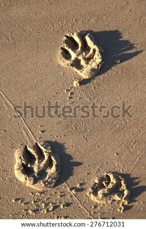 dog footprints in sand with shadow - stock photo