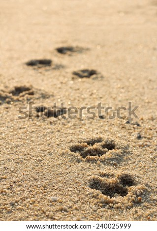 Dog footprints in the sand - stock photo