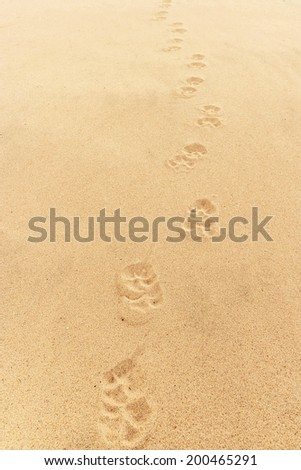 Dog footprints on sand backgrounds and texture. - stock photo