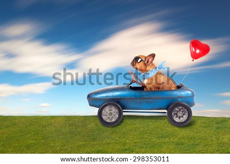 dog (French bulldog) driving a toy car with heart balloon, dog enjoys a a ride in his blue old car - stock photo