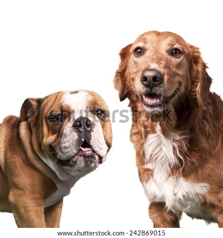 dog friends - stock photo