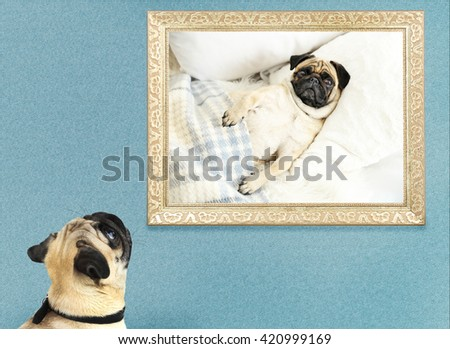 Dog from back looking of frame with photo on wall - stock photo
