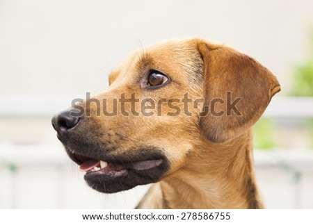 Dog - funny look - stock photo