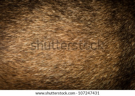 dog fur - stock photo