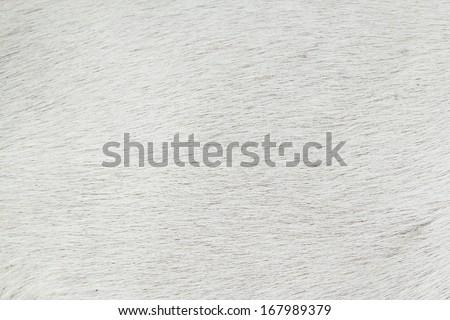 Dog fur - stock photo
