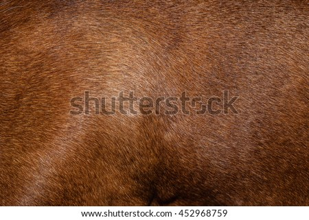 Dog fur. Animal fur texture. Fur fees. Short fur - stock photo