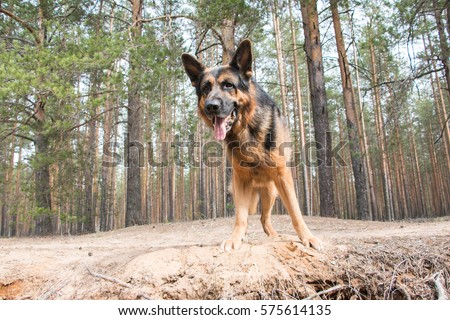 Dog Sitting Front Home Watchdog Outside Stock Photo