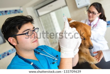Dog getting a vaccine at the vet and a doctor prepping the needle - stock photo