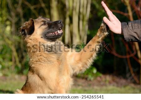 dog giving paw - stock photo