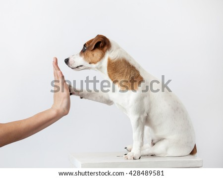 Dog greeting and human. Training puppy. Friendship - stock photo