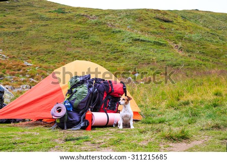Dog guarding items in the campaign sitting near tent in the mountains. Series of photos - stock photo