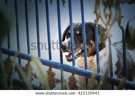dog guarding the house - stock photo