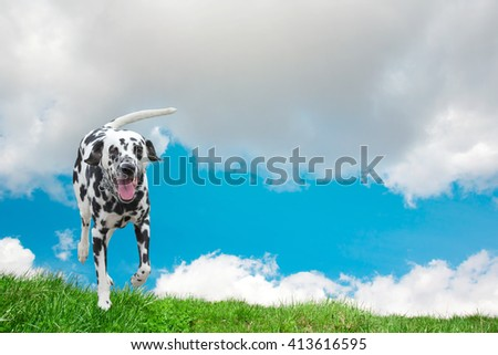 dog happily running along the field - stock photo