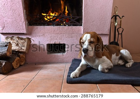dog has rest near to a fireplace  - stock photo