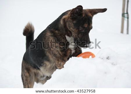 dog having fun in a snow - stock photo