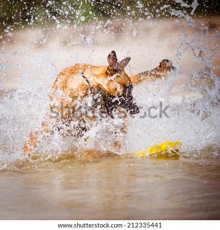 dog having fun in the water - stock photo