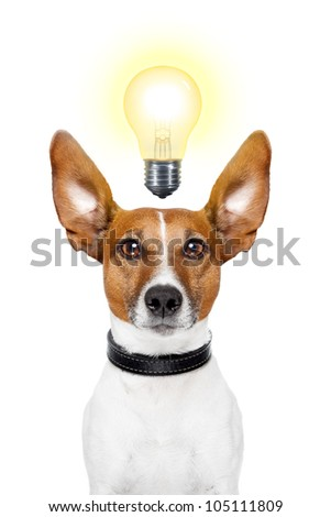 Dog having  great ideas showing a glowing lightbulb