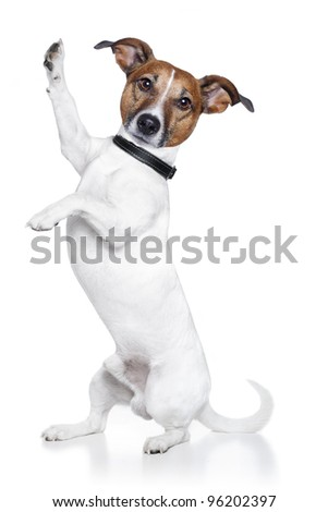 dog high five - stock photo