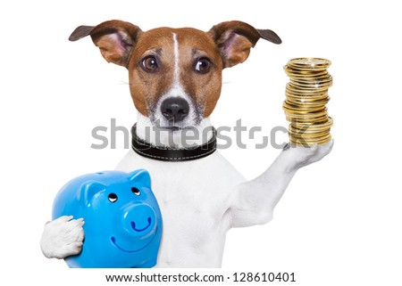 dog holding a  blue piggy bank and a stack of coins - stock photo