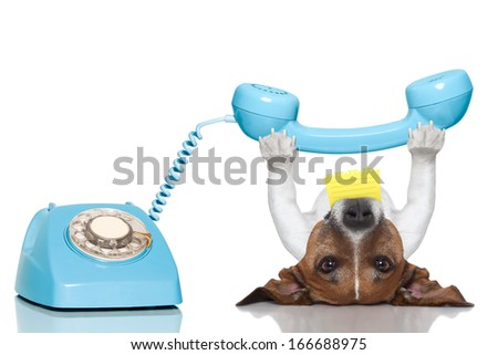 dog holding a telephone and a note lying upside down - stock photo