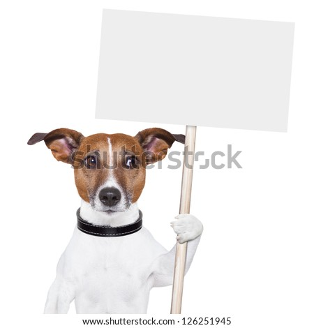 dog holding an empty placard and looking sideways - stock photo
