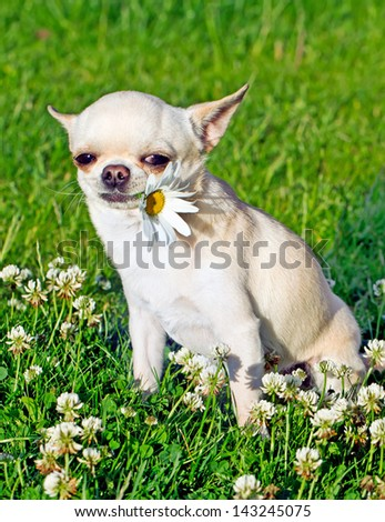 dog holding flower in mouth - stock photo