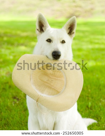dog holding hat in his mouth on green grass - stock photo