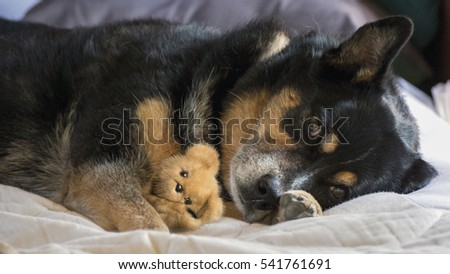 dog holding her teddy bear