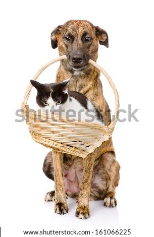 dog holding in its mouth basket with a cat. isolated on white background