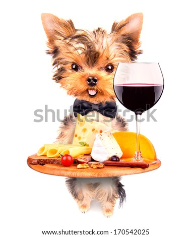 dog holding service tray with food and drink -  wine, bread, cheese and grapes - stock photo