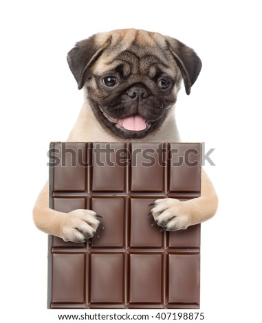 Dog hugging a bar of chocolate . isolated on white background - stock photo