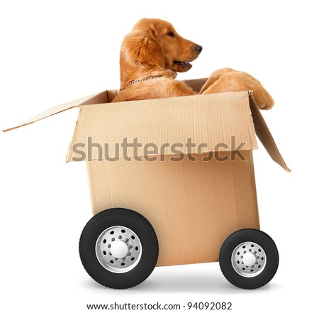 Dog in a car made of cardboard box - fast shipment concepts - stock photo