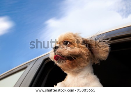 Dog in a Car Window and enjoy road trip - stock photo