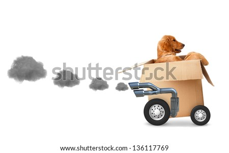 Dog in a cardboard box - fast delivery concetps - stock photo