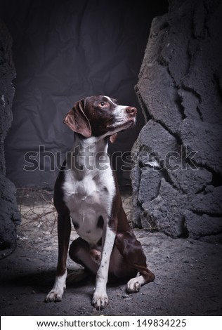 Dog in a cave decorations