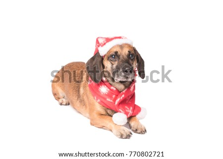 Dog in a christmas hat isolated on a white background