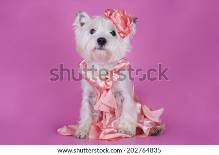 dog in a gentle pink dress on a pink background - stock photo